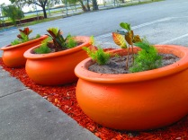 Terracotta pot plants brighten up Northwood Village